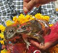 חתונת צפרדעים: מנהגי חתונה הזויים